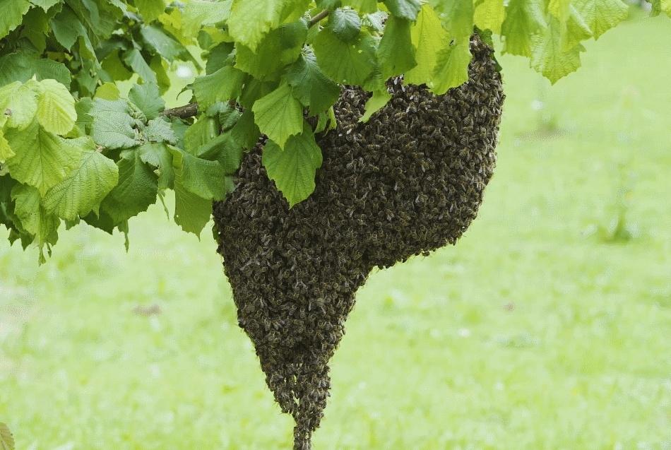 Življenje čebelje družine preko leta