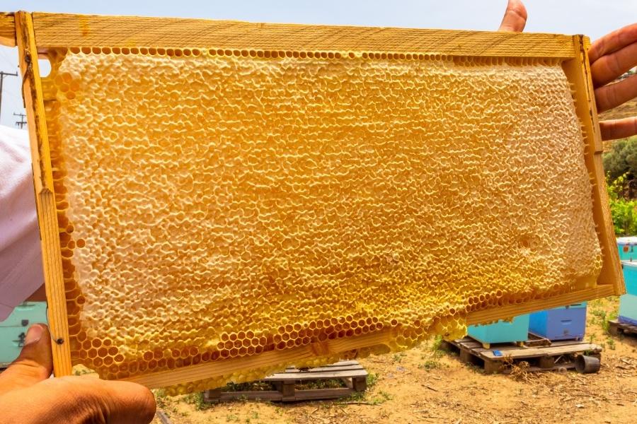 Dobra čebelarska praksa