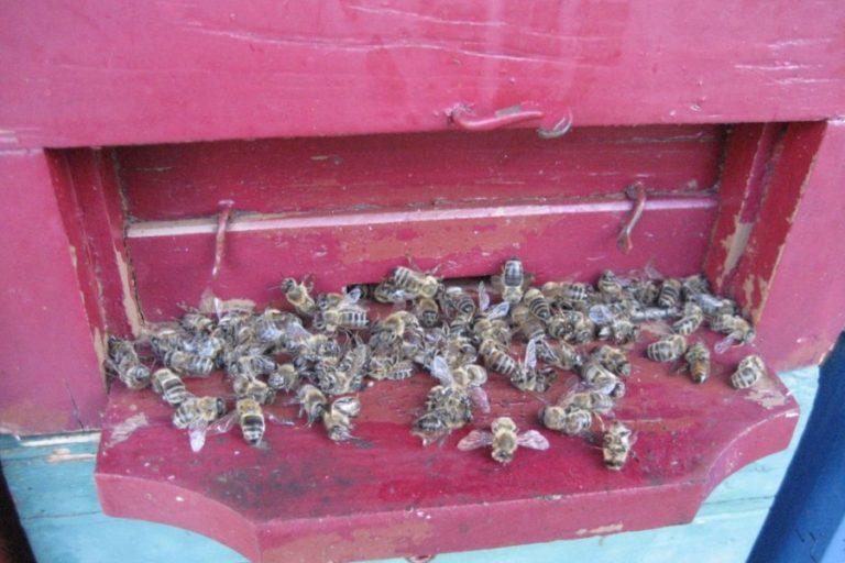 Varstvo čebel pred zastrupitvami